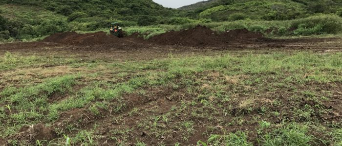 Clearing of a field, the field is green and mountain in the background