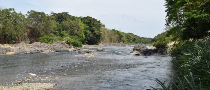 A large river in Panama surrounded by trees